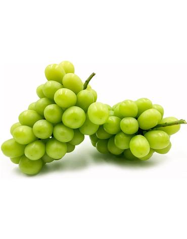 muscat-grape